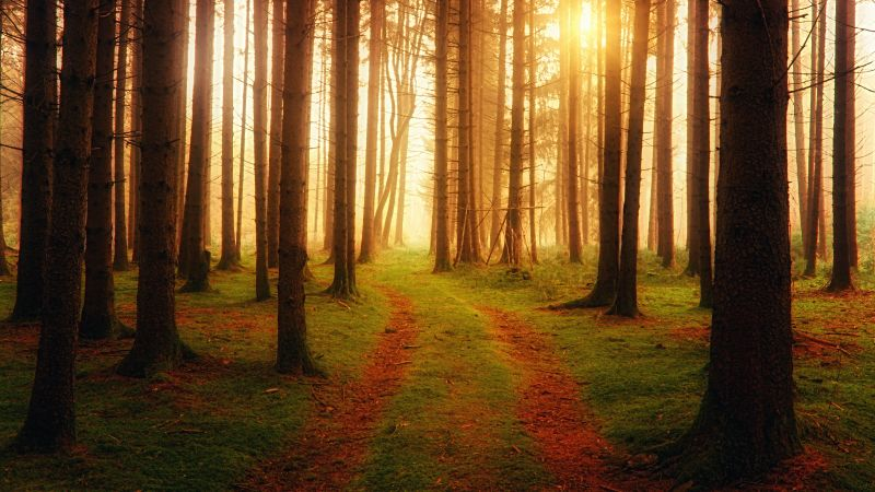 Foreign, Path, Sunlight, Ambiance, Woods, Wallpaper
