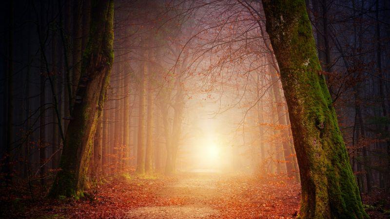 Forest, Dirt road, Foggy, Autumn, Fall, Morning light, 5K, Wallpaper