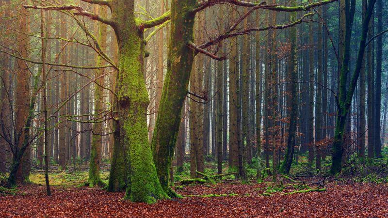 Forest, Trees, Fall, Daytime, Autumn, 5K, Wallpaper