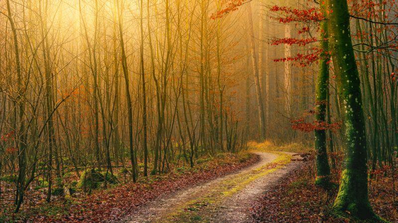 Forest, Autumn, Dirt road, Light, Atmosphere, Fall, Daytime, 5K