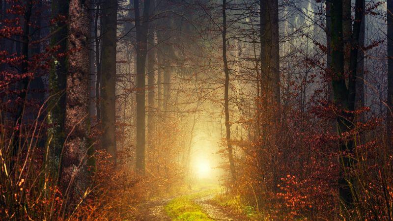 Forest, Autumn, Light, Atmosphere, Fall, Daytime, 5K, Wallpaper