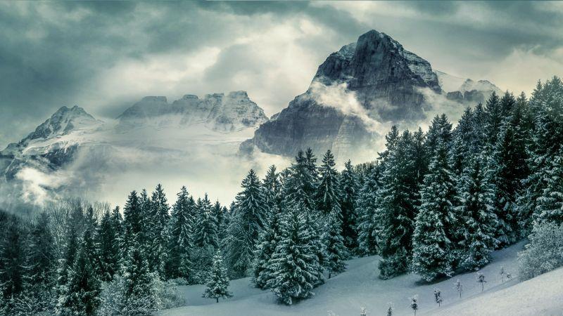 Forest, Mountains, Pine trees, Winter, Peak, Wallpaper