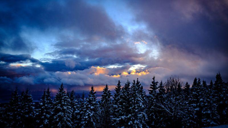 Snowy Trees, Winter, Cloudy Sky, Dusk, Scenic, 5K, Wallpaper