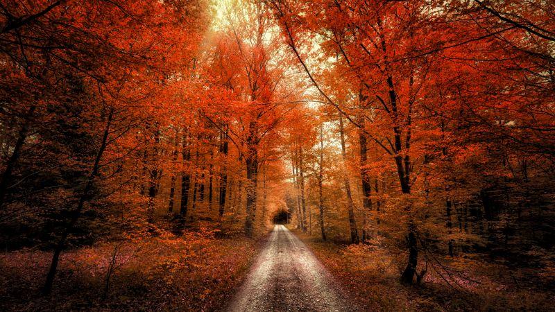 Autumn Forest, Passage, Dirt road, Seasons, Landscape, Scenery, 5K, Wallpaper
