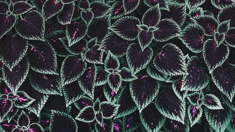 Leaf Background, Texture, Plants, Garden, 5K, Wallpaper