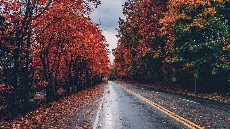 Autumn trees, Foliage, Seasons, Fall, Empty Road, Landscape, Scenery, 5K, Wallpaper