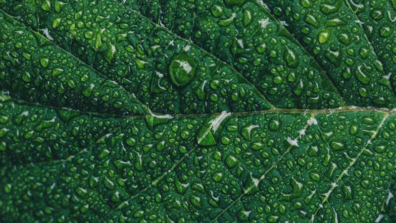 Green leaf, Water drops, Closeup, Macro, Pattern, Leaf Background, Greenery, Texture, Wallpaper