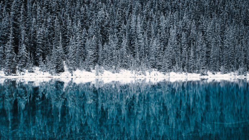 Lake Louise, Winter, Cold, Reflections, Pine trees, Frozen, Snow covered, Turquoise water, Banff National Park, Canada, Wallpaper