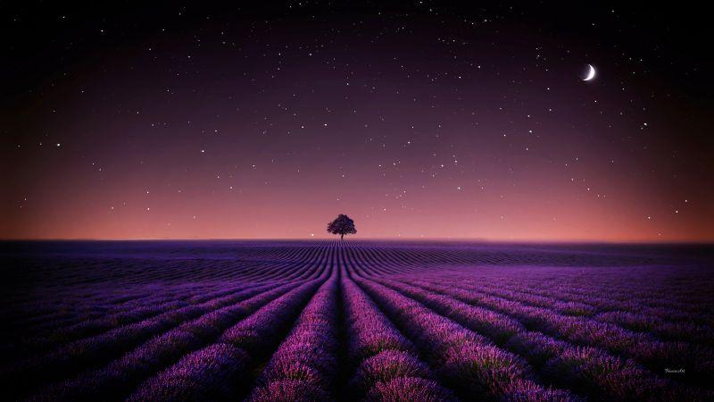 Lavender fields, Solitude Tree, Crescent Moon, Stars, Night sky, Horizon, Pattern, Landscape, Scenery, 5K, Wallpaper