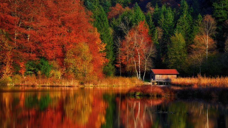 Autumn Scenery, Lakeside, Colourful, Forest, Reflection, Landscape, Wooden House, Beautiful, Wallpaper
