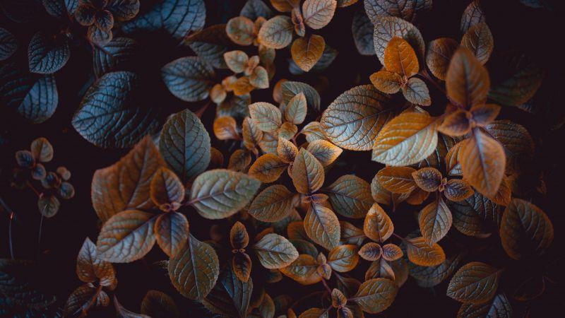 Leaves, Brown, Plant, Wallpaper