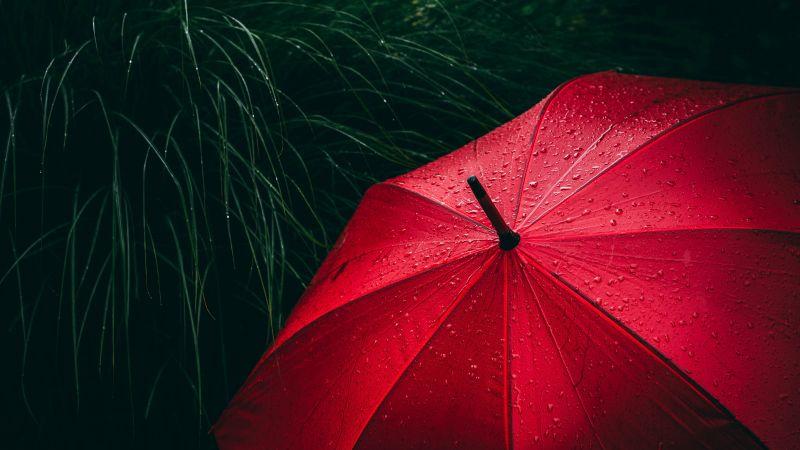 Umbrella, Red, Rain droplets, Rainy day, 5K