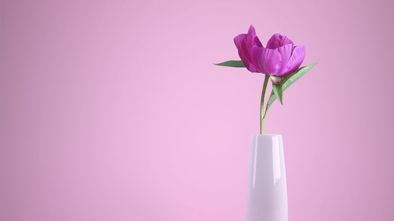 Pink flower, Flower vase, Baby pink, Pink background, Aesthetic, Wallpaper
