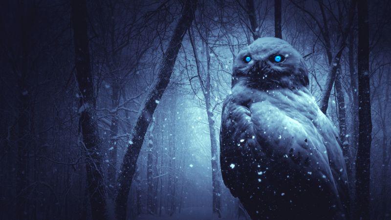 Owl, Forest, Winter, Dark, Night, Blue eyes, Scary, Snowfall, 5K, Wallpaper