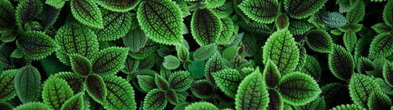 Green leaves, Plant, Aesthetic, 5K