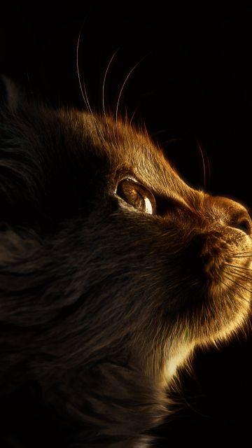 Kitten, Cat, Butterflies, Black background, Glowing, Manipulation, Closeup, Cute Cat