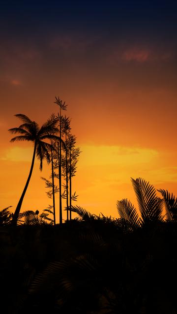 Sunset, Silhouette, Evening, Trees, Orange sky, Landscape, Scenery